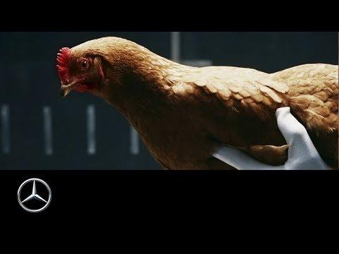 Танцующие курицы в веселой рекламе Mercedes-Benz