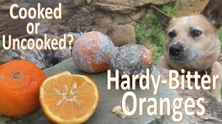 The Bitter Orange Experiment -Survival Food Prep-