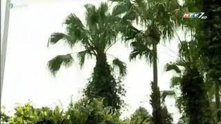 Bức họa ngày xuân - Nhạc: Trương Phi Hùng - Lời cổ: Minh Tuấn - Trình bày: NSND Trọng Hữu & Thu Vân