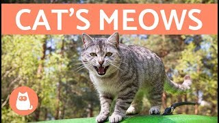 Cat's Meows and What They Mean