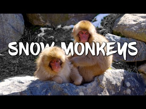 Snow Monkeys 5K Retina 60p