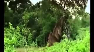 Kaprosuchus, Iguanodon, Megatherium, Microraptor