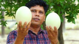 Big Ostrich Egg Omelette | Cooking skill | Village Food Channel