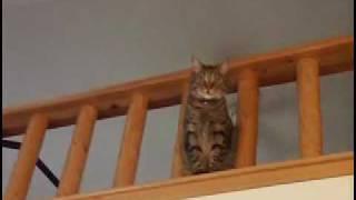Talking Cat : Apollo can say