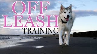 Teach Your Husky To Be Off-Leash Forever! (3 Easy Steps)