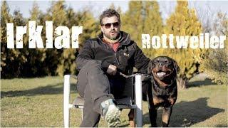 Köper Irkları -  Rottweiler