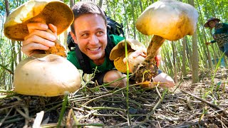Head-Sized MUSHROOMS!! 🍄  Pick + Cook 3 Ways - LOCAL FOOD DELICACY!!