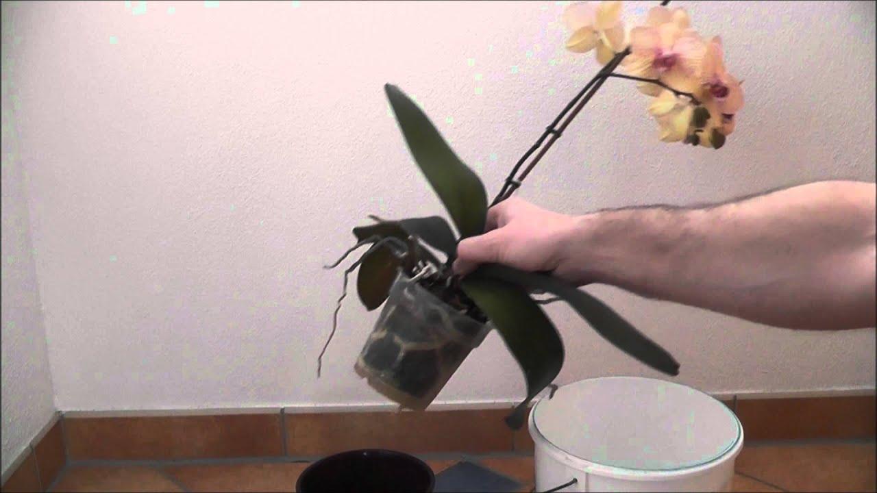 Orchideenpflege