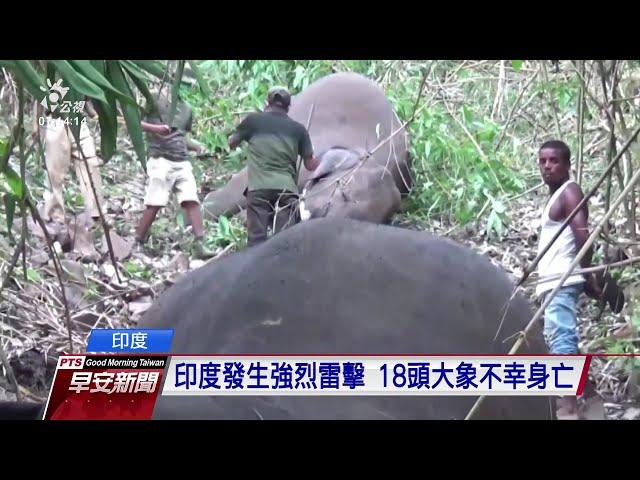 印度雷擊頻傳 阿薩姆邦18頭大象遭擊中身亡