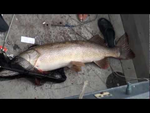 Рыбалка на Енисее - мега щука
