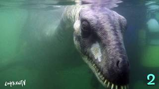 5 Megalodon Sharks & Mysterious Sea Creatures Encounters!