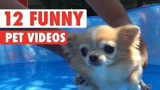 12 Funny Pet Videos Compilation 2020