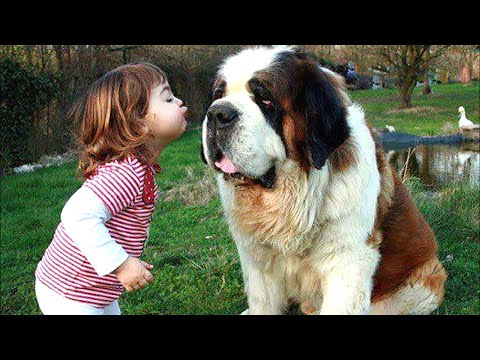 Baby Playing with St Bernard Dog A Beautiful friendship   Dog loves Baby Compilation