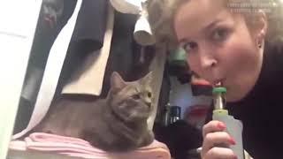 Смешные КОТЫ   Лучшие приколы   Funny cats compilation  Подборка #2