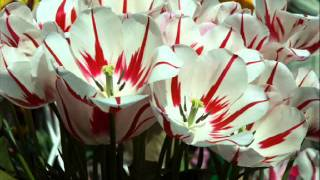 Beautiful Flowers - slideshow of pretty spring and summer flower pictures (wall photos)