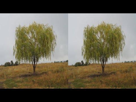Autumn Journey 3D! 3D video!