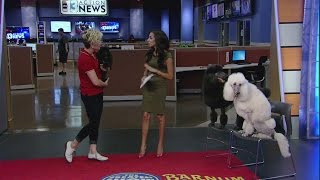 INTERVIEW: Ringling Bros. and the Barnum and Bailey Circus