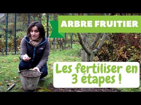 Comment soigner naturellement ses fruitiers le traitement d 39 hiver sur pommier cerisier - Arbre pour petit jardin ville colombes ...
