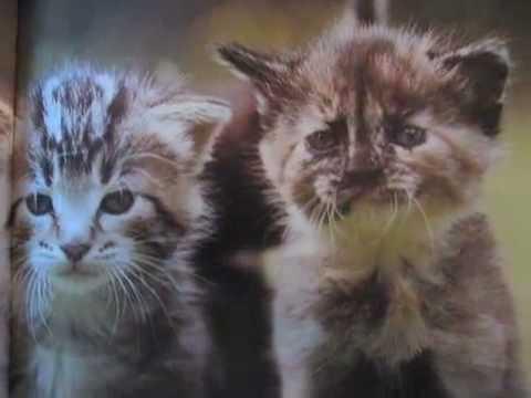 Kittens inspired by kittens girl on tyra
