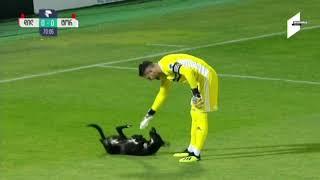 Pas je utrčao na teren i prekinuo meč, a onda potezom nasmijao cijeli stadion (VIDEO)