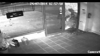 Ovom lopovu se smije cijeli svijet (video)