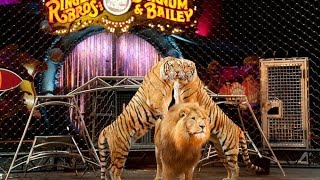 Ringling Bros. and Barnum & Bailey Circus  Xtreme 2015