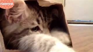 Funny Cats Sliding on Wood Floors