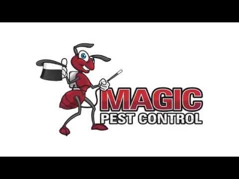 Bee Control   Magic Pest Control