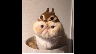 Top Funny Cats - Top Highlights of Cats That Will Make You Laugh - Super Funny Animal Compilation