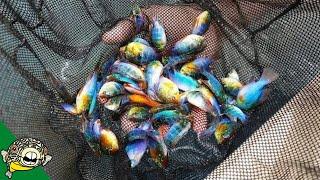 1 MILLION FISH at this Tropical Fish Farm. [Tour]