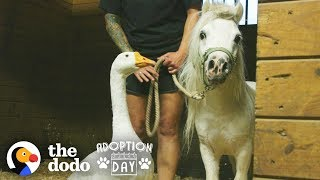 Rescued Goose, Mini Horse Are Inseparable — Watch Them Get Adopted Together | The Dodo Adoption Day