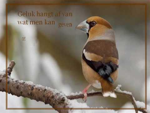 spreuken over vogels Gedichten | VideoMoviles.com spreuken over vogels