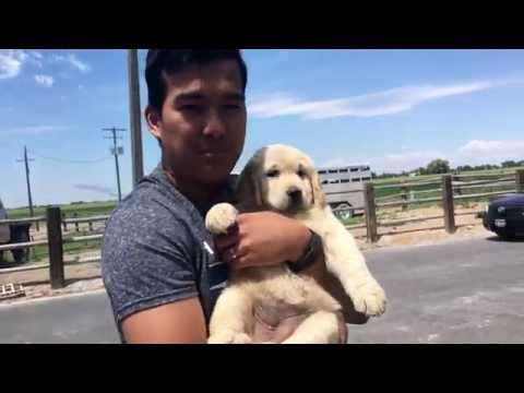 Surprising My Husband With A Puppy!!