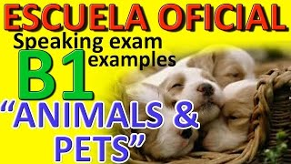 Sample B1 Speaking Test: Animals and pets