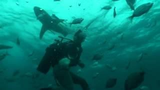 カマストガリザメ2