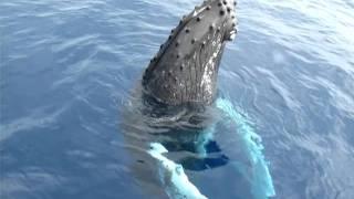 Ballena gris amigable