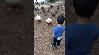 Five little Duck