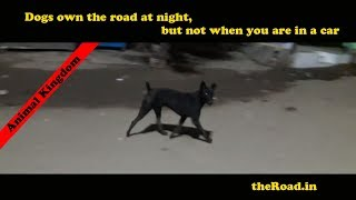 Power Play | Dog vs Human (in car) |  Who is the BOSS | Man vs Wild