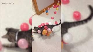 CATS vs BALLOONS 😂 (HD) [Funny Pets] 2019
