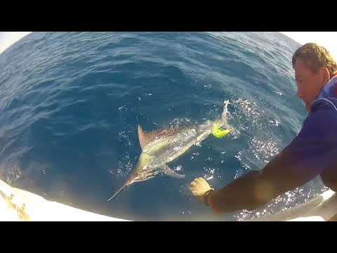 marlin compilation Cairns