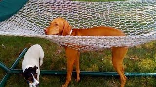 YOU'LL LAUGH ALL DAY LONG ★ Ultimate FUNNY And CUTE DOGS