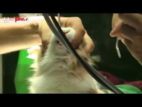 Conigli: sterilizzati è meglio - L'operazione