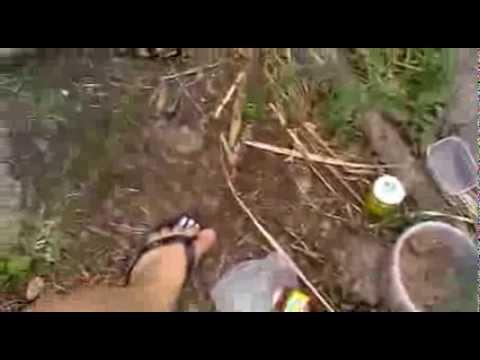 Толстолобика на летнюю вертикалку
