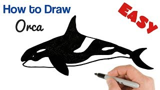 How to Draw Killer Whale Orca | How to Draw Animals Easy Art Tutorial