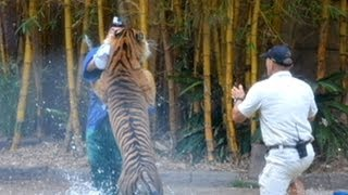 Caught On Tape: Animal Trainer Fights Life After Tiger Attack | World News Tonight | ABC News