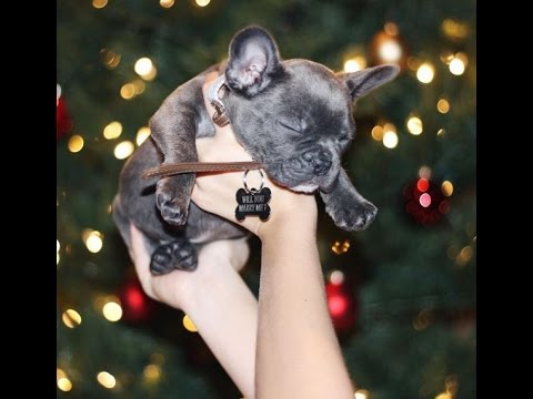 Christmas Surprise of a Puppy AND a Proposal (this is amazing!!)