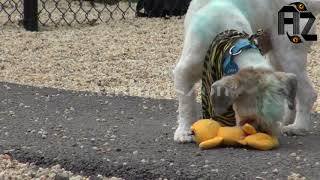 Animals zon Smarty Dogs   Funny Dog Video Compilation   Funny Dogs - A Funny Dog Videos Compilatio