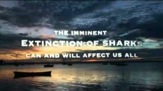 サメ -真実8-