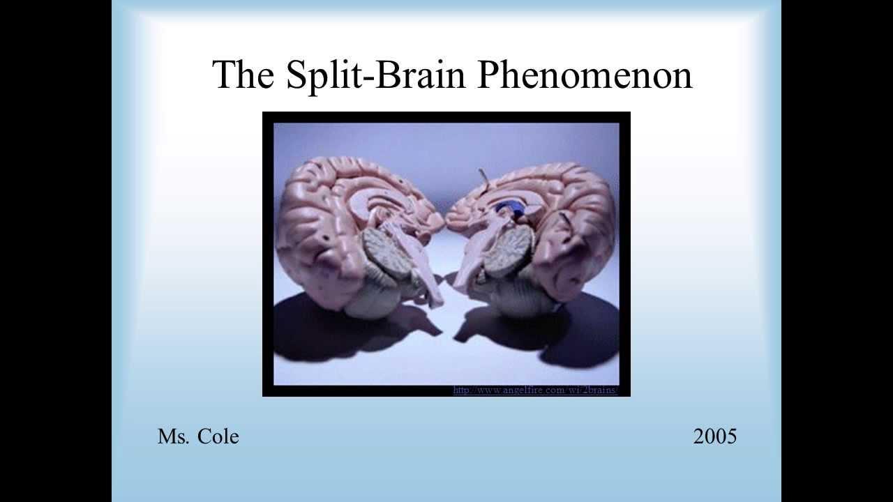 Split brain does not lead to split consciousness