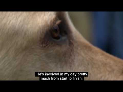 How NAB is helping Guide Dogs Victoria